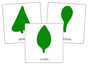Botany Cabinet Leaf Shape Cards - Montessori Print Shop