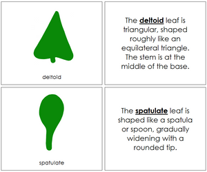 Botany Cabinet Leaf Shapes Book - Montessori Print Shop