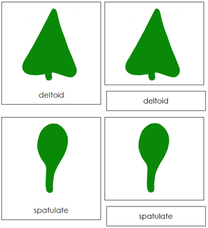 Botany Cabinet Leaf Shape 3-Part Cards - Montessori Print Shop