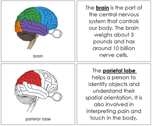 Brain Nomenclature Book (red) - Montessori Print Shop