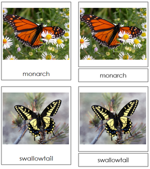 butterflies - Montessori Print Shop