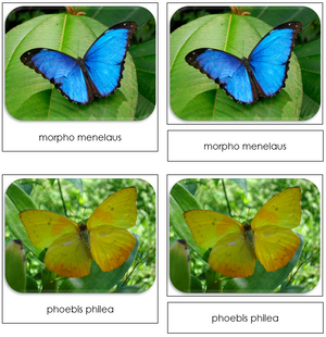 Butterflies - Safari Toob Cards