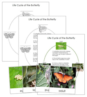 Butterfly Life Cycle Nomenclature Cards & Charts - Montessori Print Shop