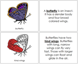 Butterfly Nomenclature Book (red) - Montessori Print Shop