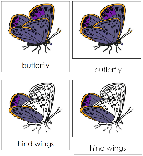 Butterfly Nomenclature Cards - Montessori