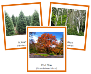 Canadian Provincial Trees - Montessori geography cards