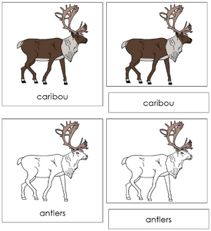 Caribou Nomenclature 3-Part  Cards - Montessori Print Shop