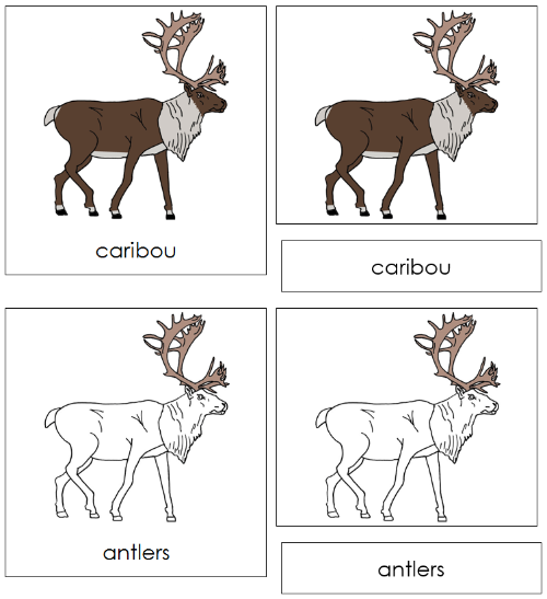 Caribou Nomenclature Cards - Montessori