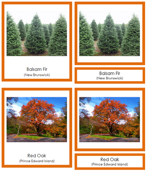 Canadian Provincial Trees (color-coded) - Montessori Print Shop