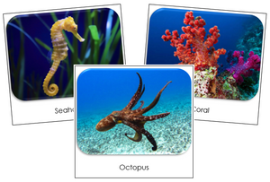 Coral Reef Safari Toob Cards - Montessori Print Shop