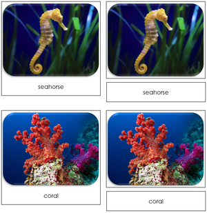 Coral Reef - Safari Toob Cards