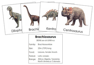 Dinosaurs Set 1 - Montessori Print Shop Science Cards