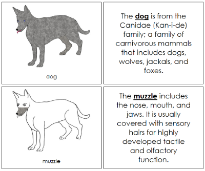 Dog Nomenclature Book - Montessori