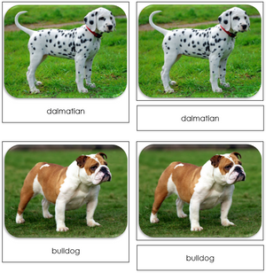 Dogs - Safari Toob Cards
