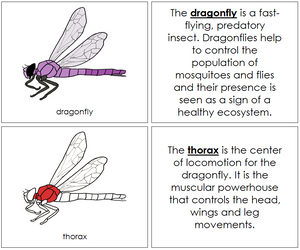 Dragonfly Nomenclature Book (red) - Montessori Print Shop