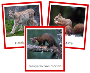 European Animals - montessori continent cards