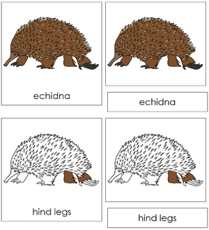 Echidna Nomenclature Cards - Montessori