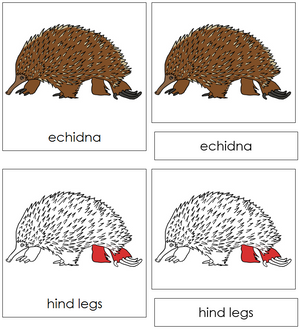 Echidna Nomenclature Cards (red) - Montessori Print Shop