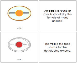 Egg Nomenclature Book (red) - Montessori Print Shop
