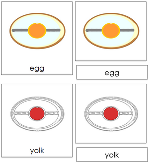 Egg Nomenclature Cards (red) - Montessori Print Shop