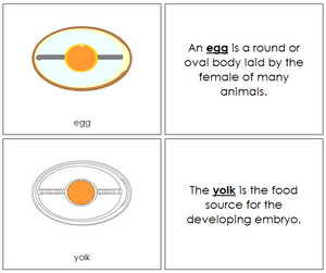 Egg Nomenclature Book - Montessori Print Shop