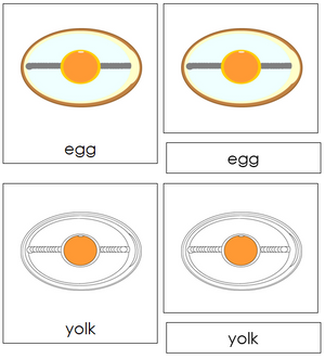 Egg Nomenclature Cards - Montessori Print Shop