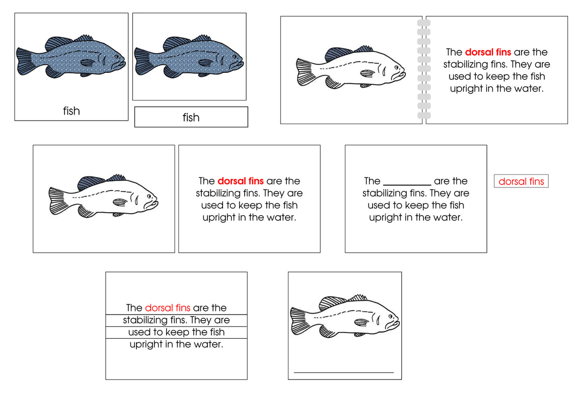 Fish Definition Set - Montessori Print Shop nomenclature