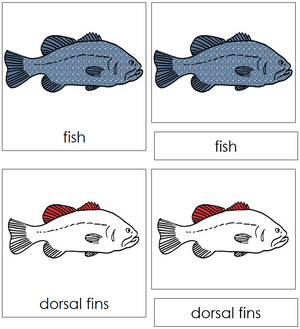 Fish Nomenclature Cards (red) - Montessori Print Shop