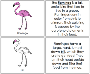 The Flamingo Nomenclature Book - Montessori Print Shop