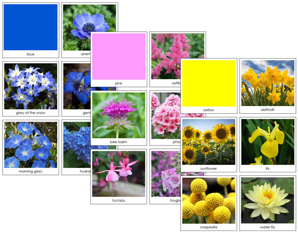 Flower Color Sorting Cards