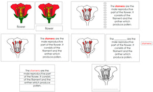 Flower Definition Set - Montessori Print Shop nomenclature