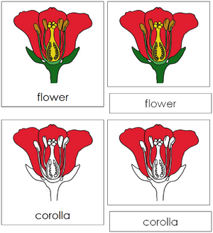 Flower Nomenclature 3-Part Cards - Montessori Print Shop