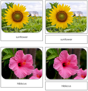 Flowers - Safari Toob Cards