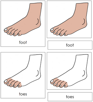 Foot Nomenclature Cards - Montessori Print Shop