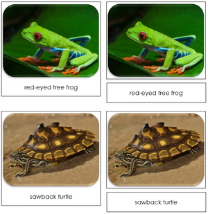 Frogs & Turtles - Safari Toob Cards