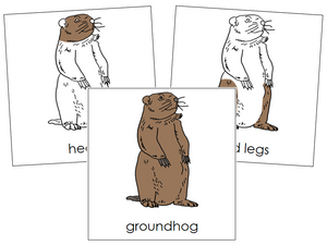 Groundhog Nomenclature Cards - Montessori Print Shop