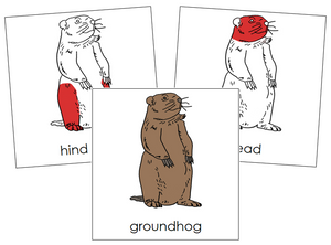 Groundhog Nomenclature - Cards (red)