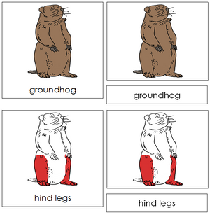 Groundhog Nomenclature 3-Part Cards (red) - Montessori Print Shop