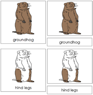 Groundhog Nomenclature 3-Part Cards - Montessori Print Shop