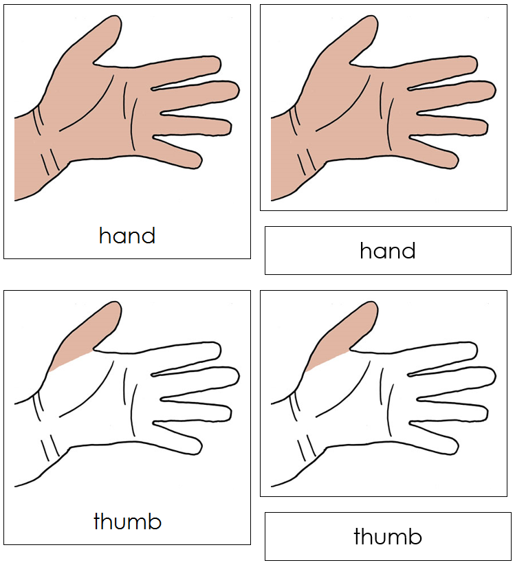 Hand Nomenclature Cards - Montessori Print Shop