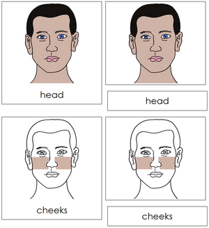 Head Nomenclature Cards - Montessori Print Shop