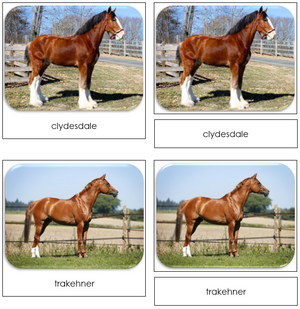 Horses - Safari Toob Cards