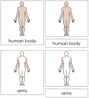 Human Body Nomenclature Cards - Montessori Print Shop
