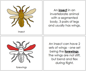 Insect Nomenclature Book (red) - Montessori Print Shop