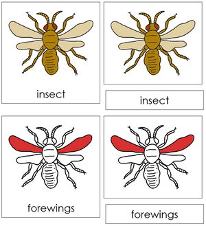 Insect Nomenclature Cards (red) - Montessori Print Shop