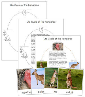 Kangaroo Life Cycle Nomenclature Cards & Charts - Montessori Print Shop