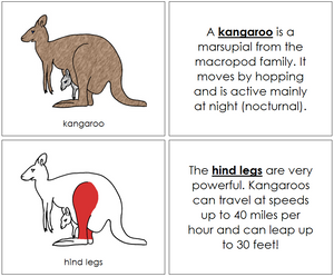 Kangaroo Nomenclature Book (red) - Montessori Print Shop