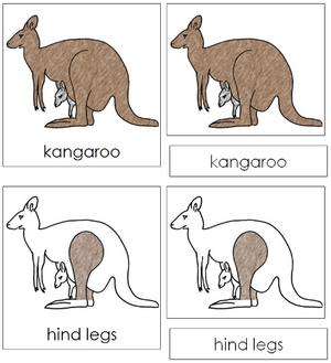 Kangaroo Nomenclature Cards - Montessori