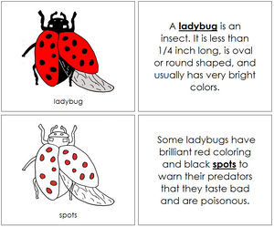 Ladybug Nomenclature Book (red) - Montessori Print Shop