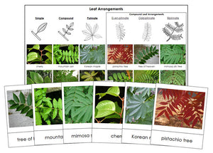 Leaf Arrangements - Montessori Print Shop